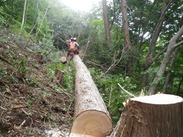 伐採・搬出の技術